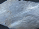 3D GRAPTOLITES - SILURIAN, CARDIGANSHIRE, WALES